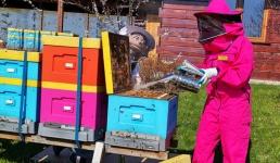 Fundacja Apilandia edukuje filmami o pszczołach